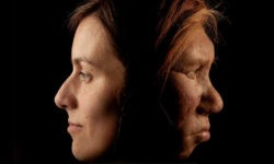 Are Caucasians human or neanderthal. Are white people from africa